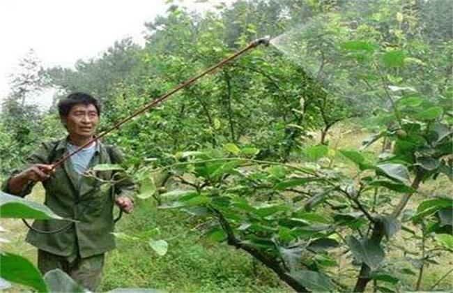 果树冲施肥方法和误区