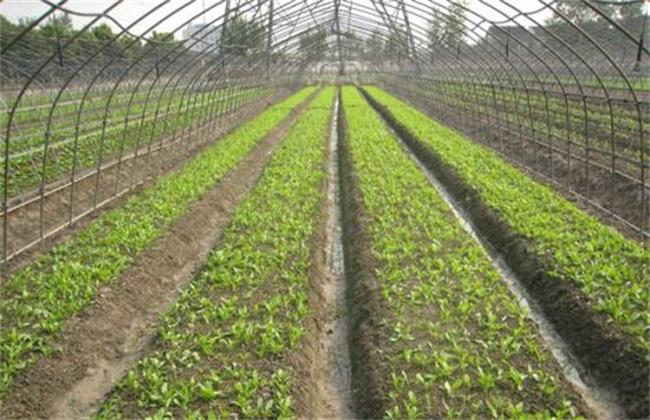 胡萝卜高产育苗方法