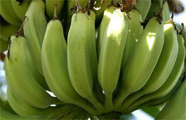 香蕉迟抽蕾的管理要点