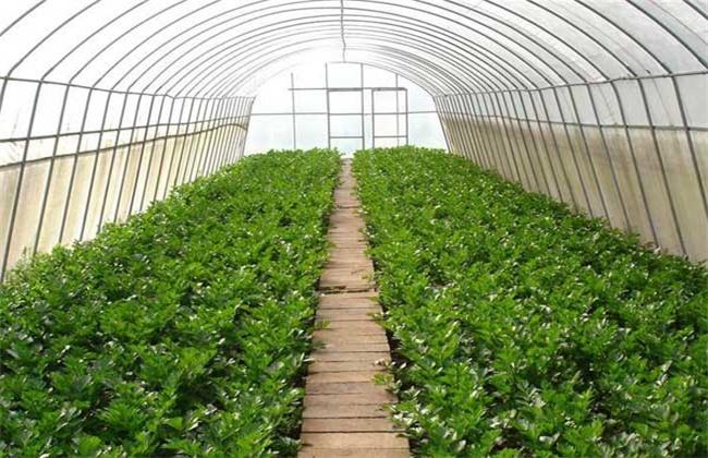 春季蔬菜种植三要点