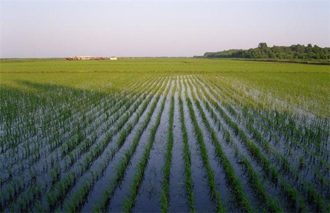 水稻浮肥现象的原因