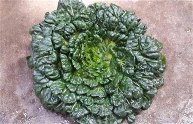 塔菜的种植技术