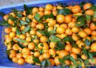 柑桔最新价格多少钱一斤?普遍的柑桔种类及产地介绍