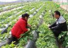 农村短期种植什么赚钱?