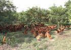 林下养鸡的优势在哪里