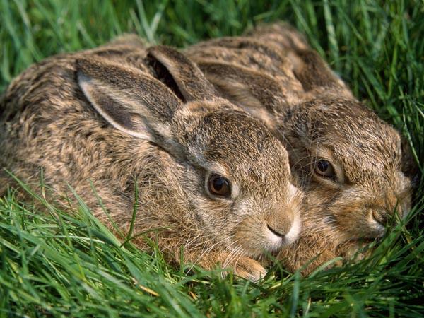 如何观察兔粪治兔病?