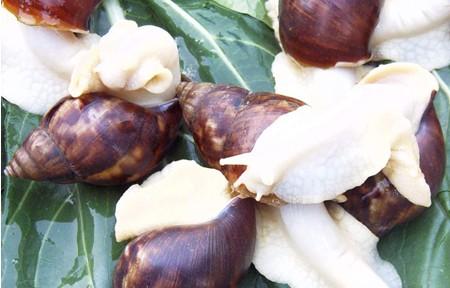 白玉蜗牛的生活习性
