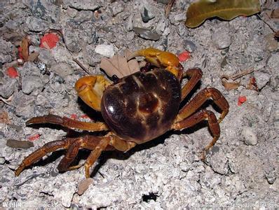 螃蟹生锈斑了怎么办?