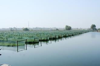 螃蟹养殖行业的发展现状