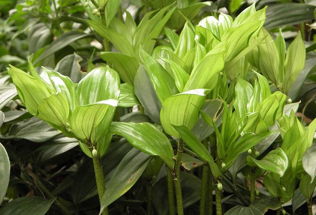 关于贵州省晴隆县可以种植玉竹吗的回答