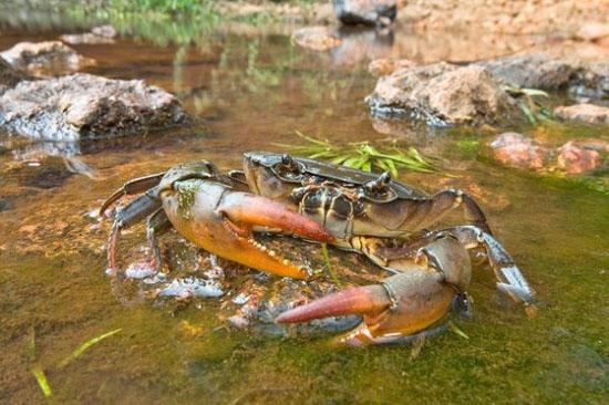 河蟹养殖技术