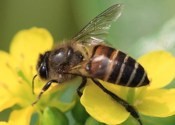 蜜蜂养殖的基本知识