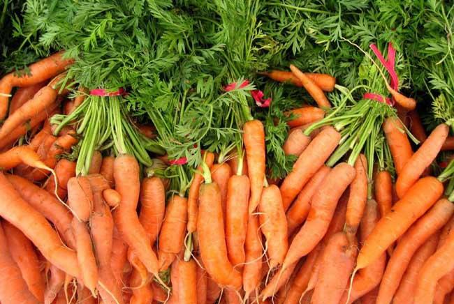 胡萝卜高产栽培技术