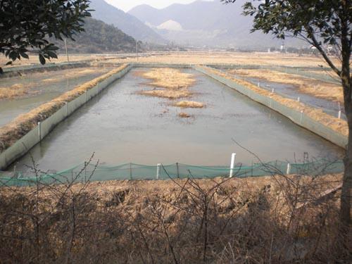 泥鳅养殖的常见养殖模式