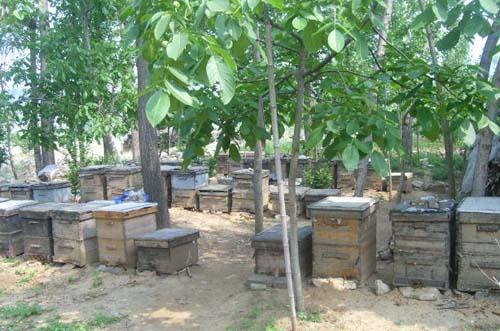 蜜蜂养殖场消毒方法