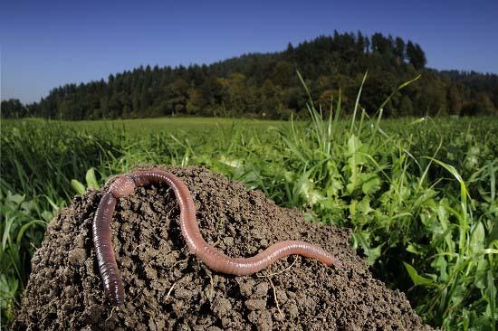 蚯蚓的养殖技术