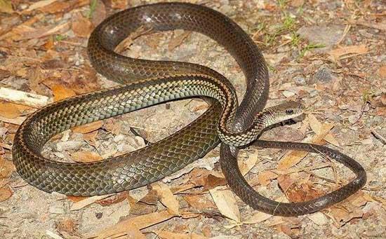 蛇吃什么食物?