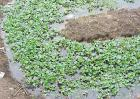 黄鳝养殖技术