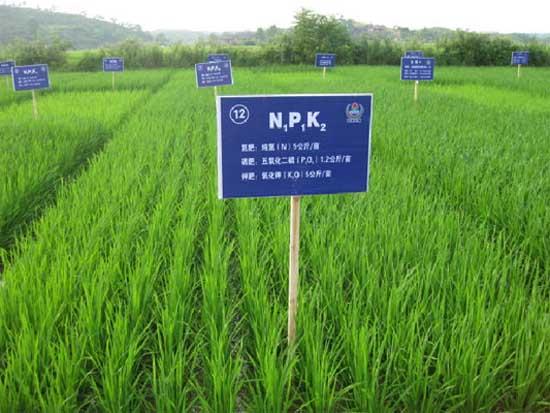 水稻各时期施肥量和施肥方法