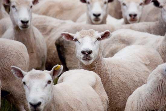 养羊场科学管理制度