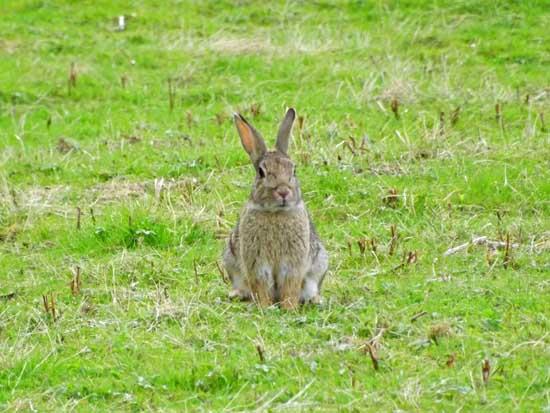 养兔子赚钱吗?