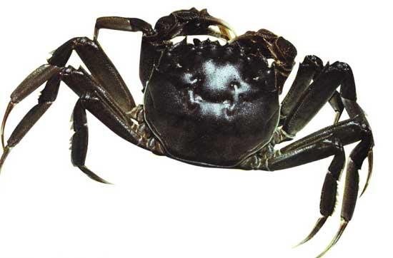 大闸蟹养殖要哪些条件?