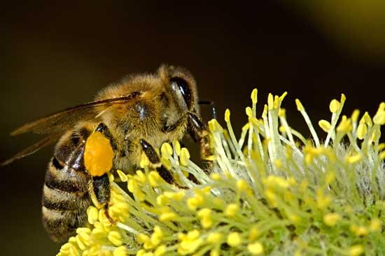 蜜蜂冬季养殖技术