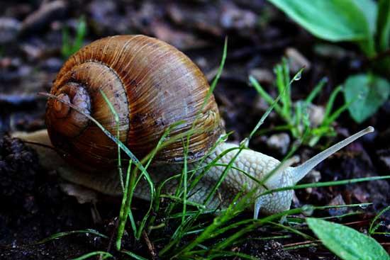 蜗牛的养殖前景