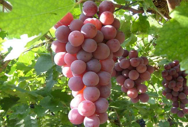 种植什么水果最赚钱