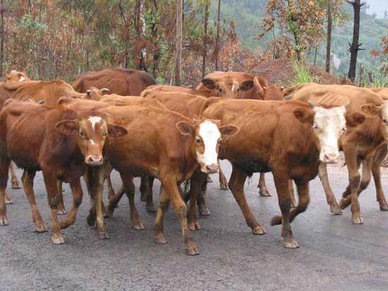 常见的养殖项目有哪些及什么养殖前景最好