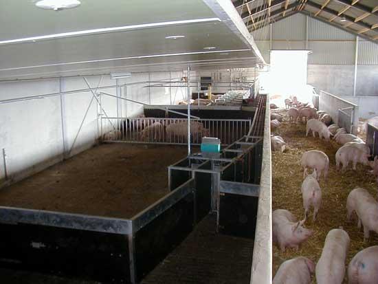 现代化养猪场设计方案
