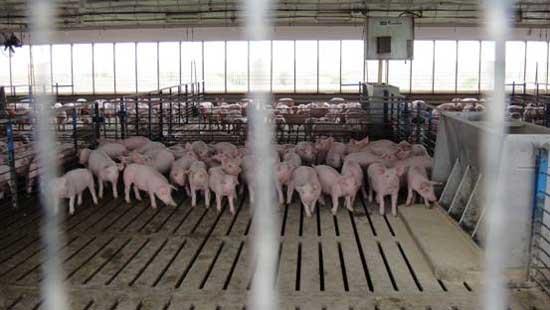 猪圈的砌体结构图