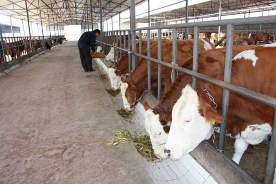 一头牛大概能卖多少钱