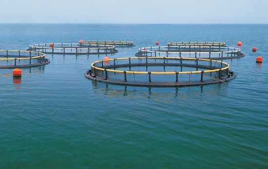 水产养殖专业