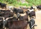 农村养殖项目有哪些?