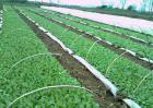 蔬菜的高效育苗技术