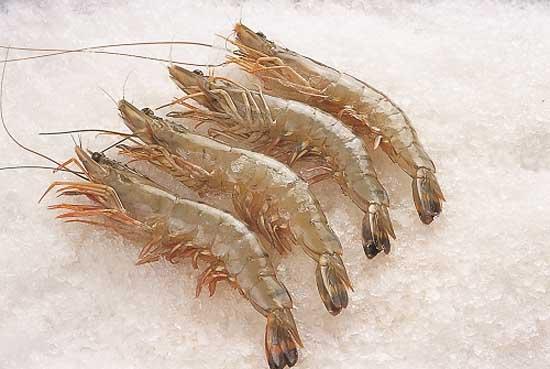 青虾鱼虾混养技术