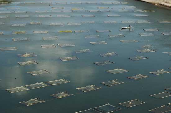 水产养殖业的发展前景怎么样?
