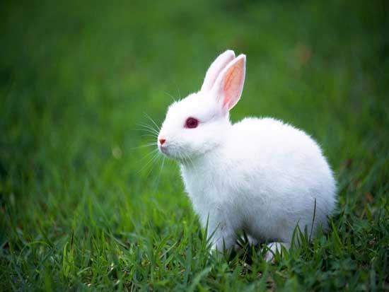 兔子养殖的市场前景