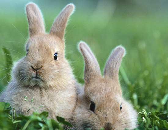 肉兔养殖成本和利润