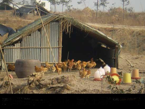 土鸡散养鸡舍建设参考方案