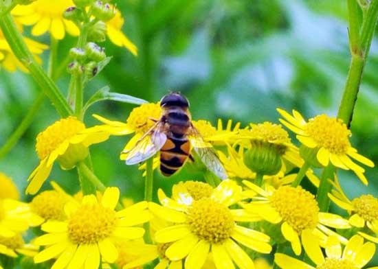 蜂王浆的功效与作用