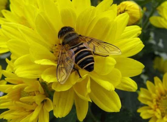 蜜蜂疾病观察诊断技术