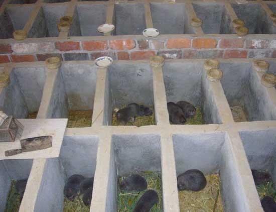 竹鼠窝室建造方法