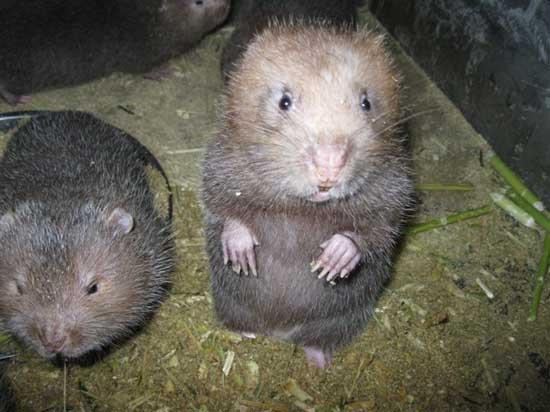 竹鼠舍养殖环境控制