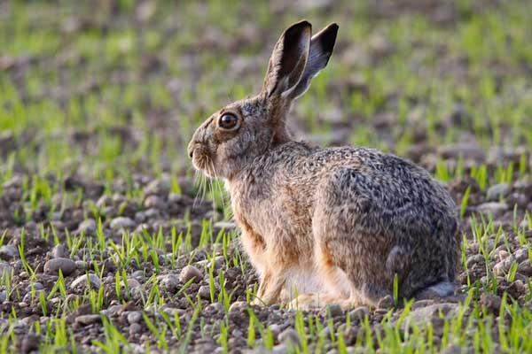 野兔养殖场建设要求