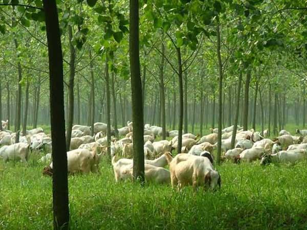 林下养殖模式都有哪些