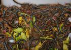 蜈蚣养殖前景