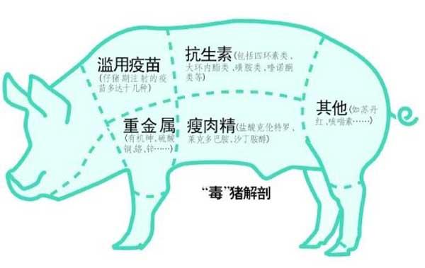 猪饲料中添加瘦肉精的危害