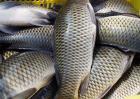 草鱼的营养价值